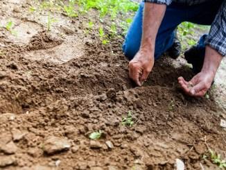 Einen Garten verschenken für gartenlose Wohnungsbesitzer.