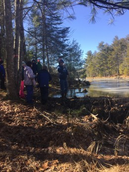Standing on a beaver dam during a hike