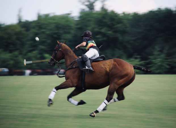 panning photo of person riding on horse