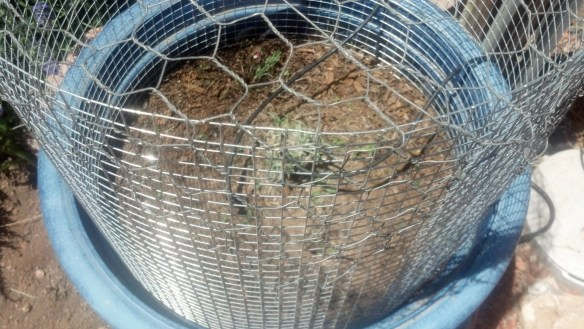 chickenwire top