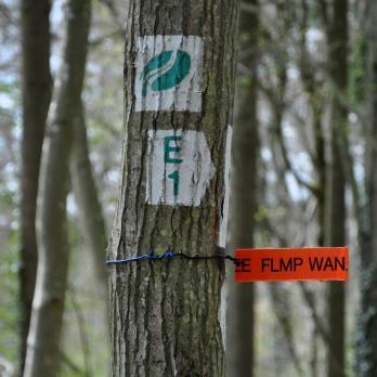 18-trailrunning-trier-22.04.17