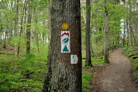 30-trailrunning-trier-22.04.17