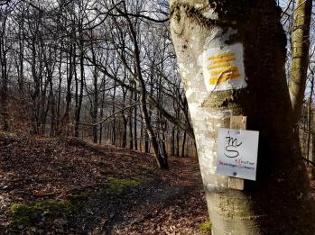 Extratour Mehringer Schweiz Rocite305 (29)