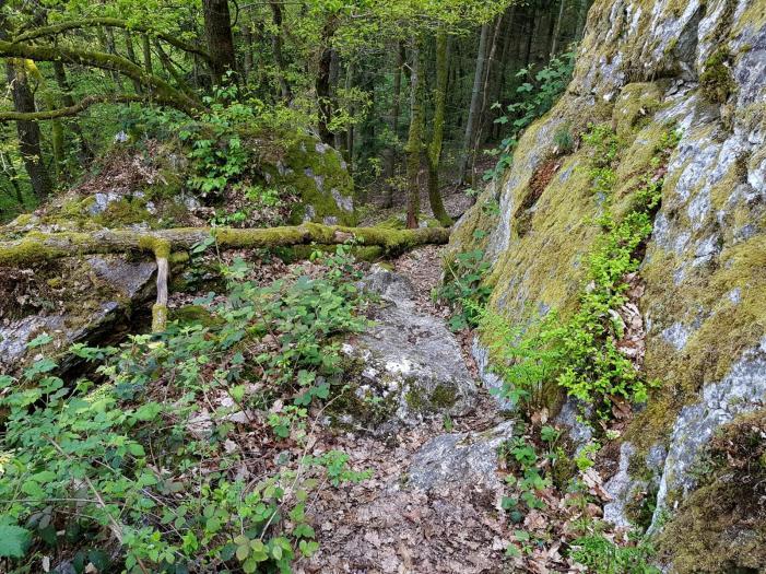 Morscheider Grenzpfad (13)