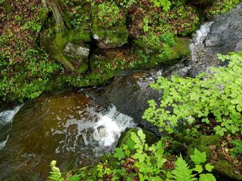 Muehlenpfad bei Ottweiler (2)