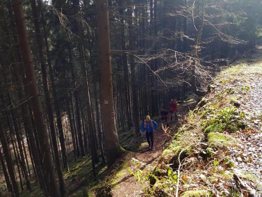 Revierguide Suedpfalz Tag 2 Inov8 Roclite305 (38)