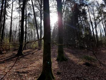 Revierguide Suedpfalz Tag 2 Inov8 Roclite305 (41)