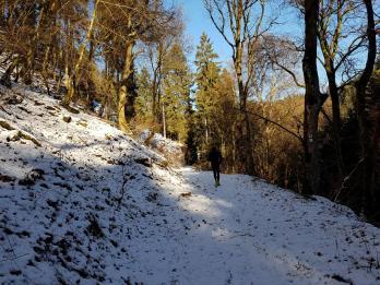 Rockenwalder Urwaldpfad (10)