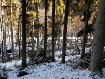 Rockenwalder Urwaldpfad (11)