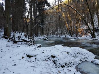 Rockenwalder Urwaldpfad (15)