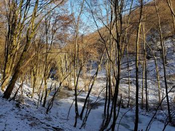 Rockenwalder Urwaldpfad (19)