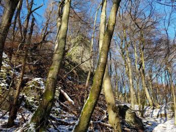 Rockenwalder Urwaldpfad (20)