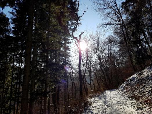 Rockenwalder Urwaldpfad (34)
