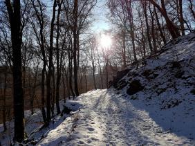 Rockenwalder Urwaldpfad (36)
