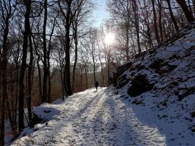 Rockenwalder Urwaldpfad (39)