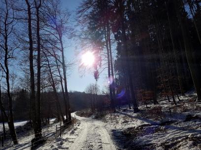 Rockenwalder Urwaldpfad (42)
