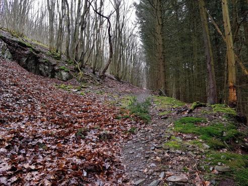 Saar-Riesling-Steig - Inov-8 Roclite 305 (3)