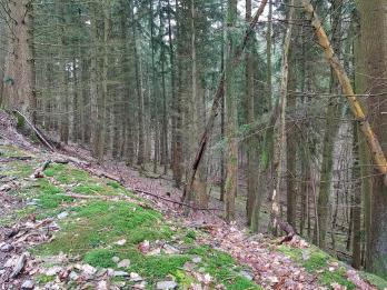 Saar-Riesling-Steig - Inov-8 Roclite 305 (5)