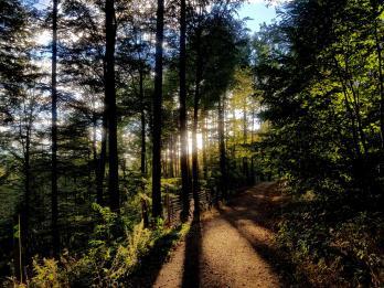 Trailrunning - Trier (15)