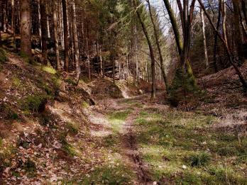 Trailrunning - Trier (2)
