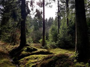 Trailrunning - Trier (20)