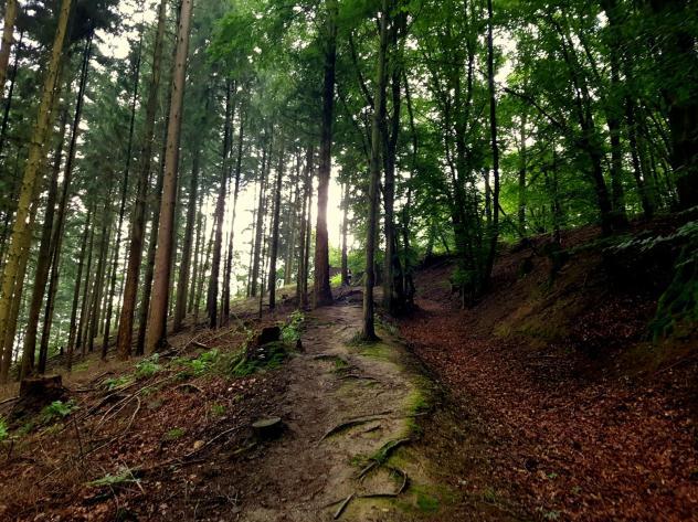 Trailrunning - Trier (31)