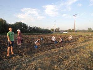 Приходская молодежь  помогла храму в уборке урожая картофеля