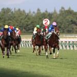 【競馬で副収入】新潟2歳ステークスGⅢ【2021】