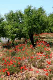 Relleu_Spain25