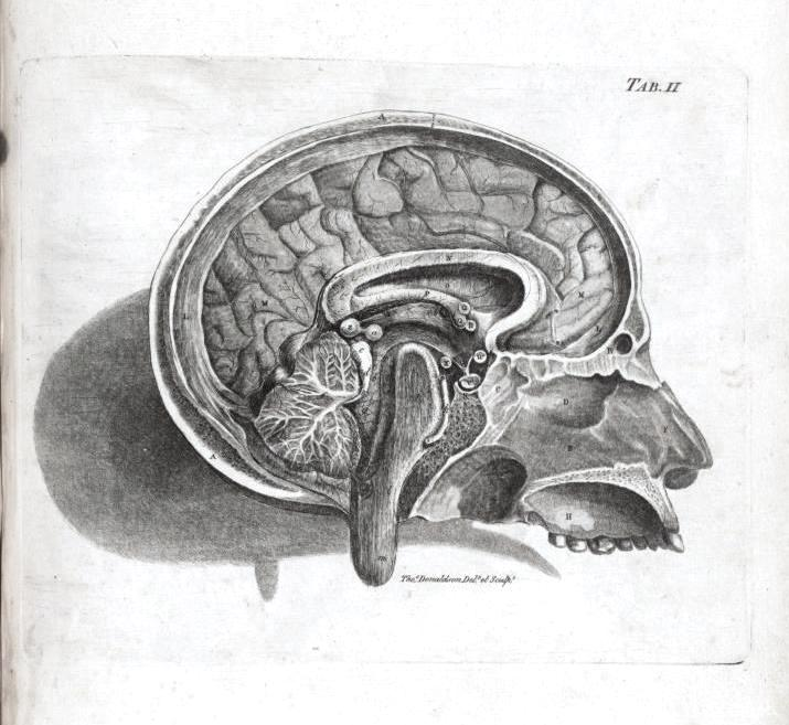Medical Anatomy Brain Cross Section Longitudinal Elliot Hurdiss