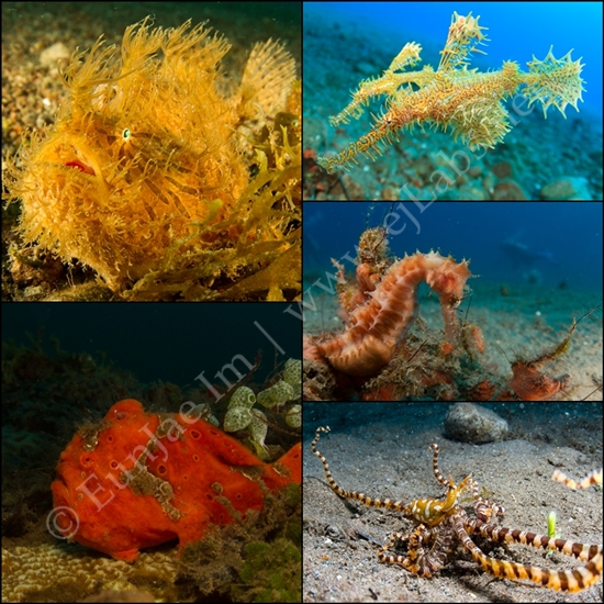 Underwater Critters of Dauin