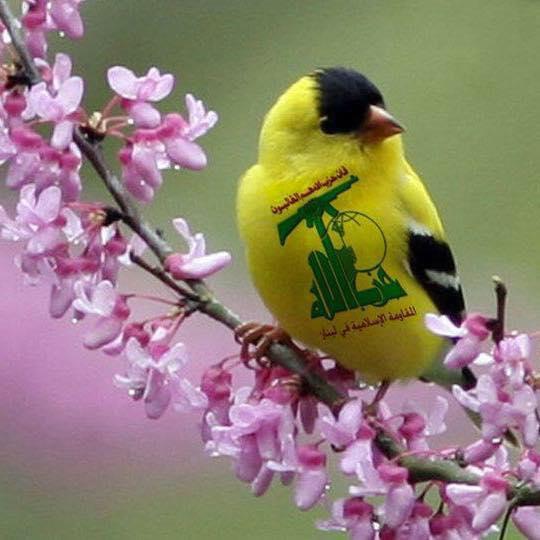 Hezbollah bird
