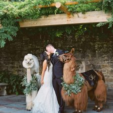 wedding with llamas