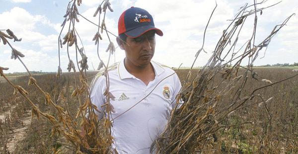 Más de 14.000 productores están afectados por el bajo precio de la soya