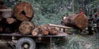 Banco Mundial dice que tala ilegal genera hasta US$ 15,000 millones