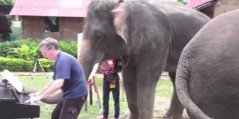 Tailandia: Mira cómo este elefante ciego toca el piano