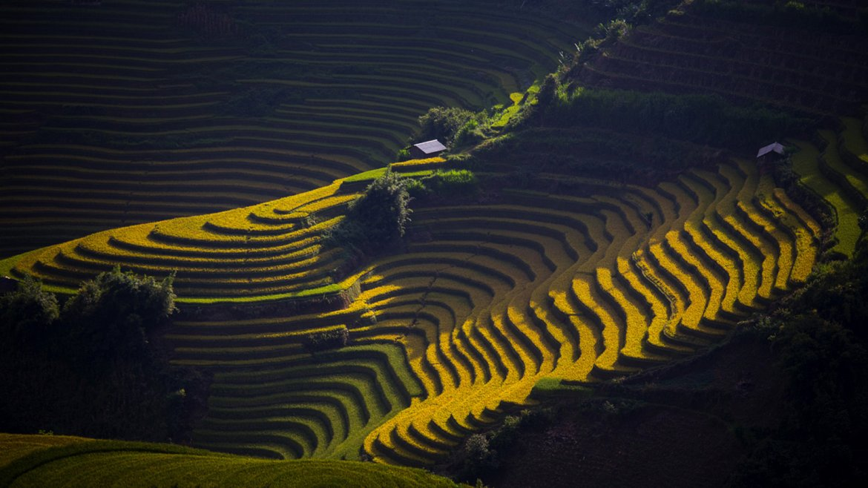 La luz de la mañana brilla a través de la granja de arroz en Mu Chang Chai, Vietnam