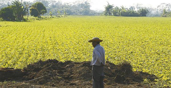 La soya ha reemplazado a los árboles. Dicen que son campesinos pobres, pero ya han saltado al umbral de la agricultura mecanizada, utilizan tractores, rastras y fumigadores para realizar su producción. Hay varias comunidades bien establecidas al interior