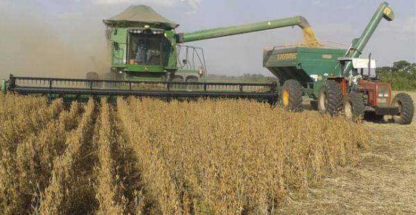 Anapo considera que en Bolivia se debería pagar a 265 dólares por tonelada de soya