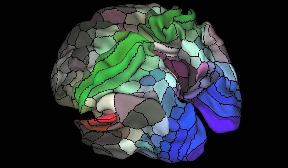 El mapa de 180 módulos, incluidas las áreas visuales (azul), auditivas (rojo), y táctilesmotoras (verde).rn rn rn rn