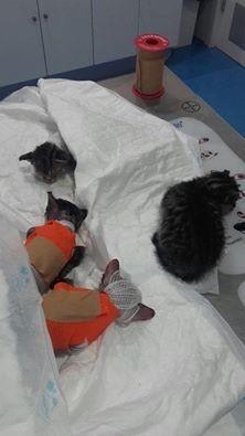 Los pequeños gatos tras ser atendidos en la clínica veterinaria.