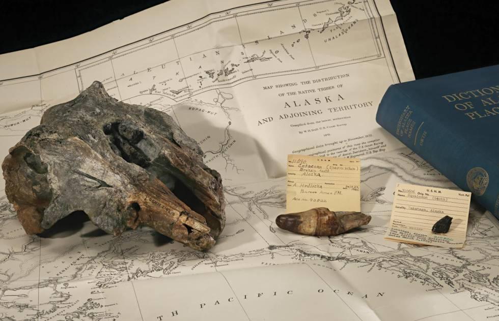 El fósil del delfín estudiado junto a un mapa del lugar dónde fue hallado.