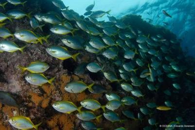 Un ecosistema único sin señales de impacto humano, con abundantes especies endémicas (Oceana - Eduardo Sorensen).