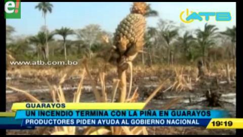 Incendio termina con la producción de piña en Guarayos