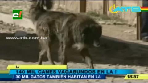 Hay 140 mil canes y 30 mil gatos vagabundos en La Paz
