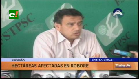 Municipio de Roboré alista declaratoria de emergencia por los efectos de la sequía