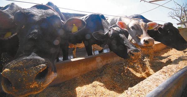 panorama  sectorial gris  productores advierten que no permitirán   reducción al valor de compra En la cabaña Naranjal indican que la estructura  de costo de la alimentación  se encareció