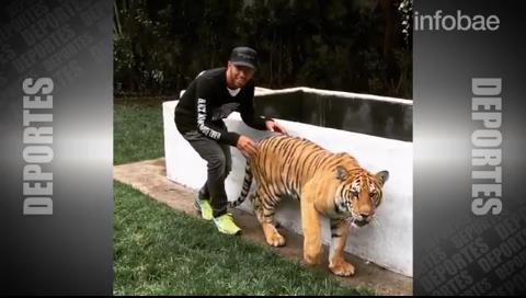 Impresionante: Lewis Hamilton asustó a un tigre y sobrevivió