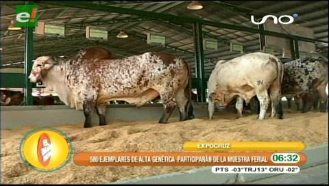 Ingreso de animales al campo ferial da inicio a Expocruz 2016