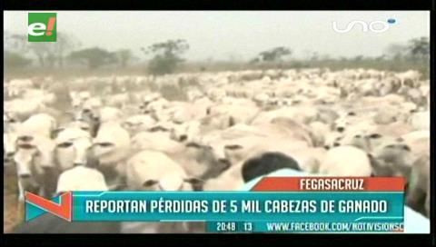 Fegasacruz reporta la pérdida de cinco mil cabezas de ganado por la sequía